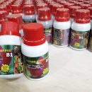 Vitamin B1 Tanaman